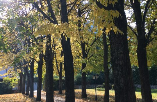 Viale in autunno